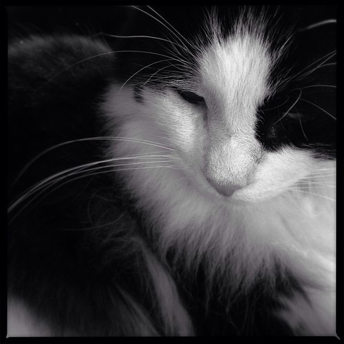 #fmsphotoaday January 15 - Black + White #catsofinstagram