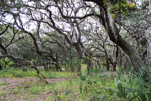 IMG_3522_Trees_in_Fred_Howard_Park