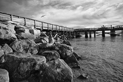 Pier and Bird