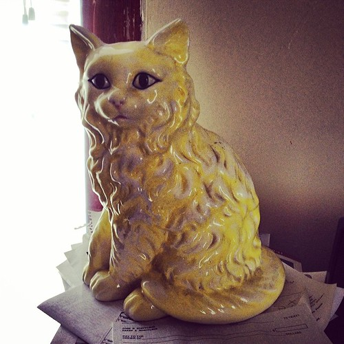 Yellow Cat #champaignurbana #schwervonfever