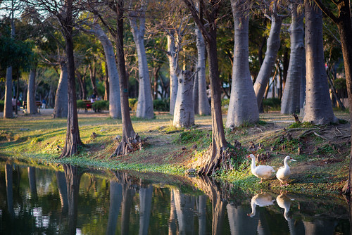 park trees nature landscape taiwan tainan d600 巴克禮公園 85f18g