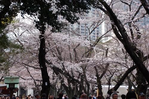 靖国神社 14.03.29