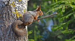 - This tree is mine!!!