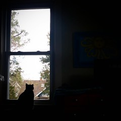Sparkie at the window.. 😻 #kittylove