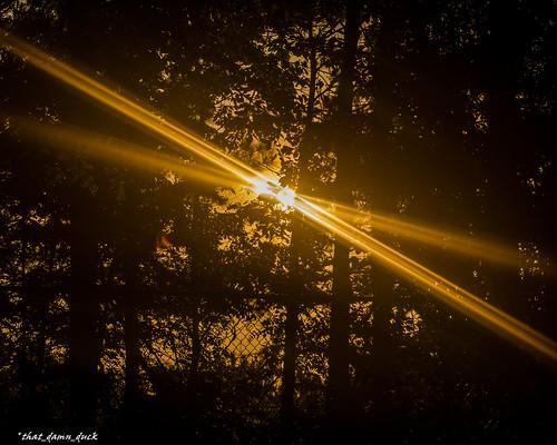 x sunrays sundown nature sunset trees