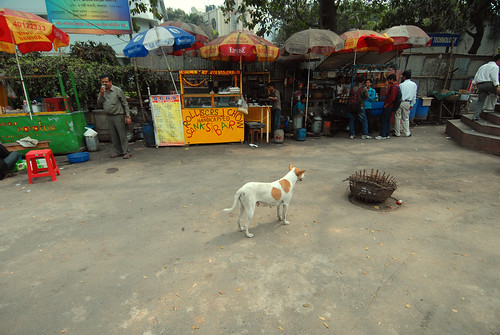 Food carts, a dog and a basket in Kolkata, India.