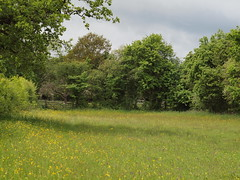 HolderMelrose meadow