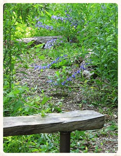 Park School ~ Blue Wild Indigo & bench