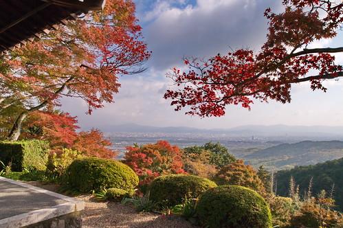 【写真】紅葉 : 善峯寺