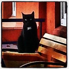 Sossi auf ihrem Lieblingsplatz auf dem Balkon,  von wo aus sie mich beobachtet #catcontent
