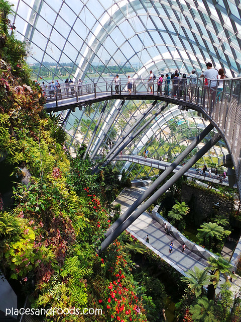 cloud forest top pathway