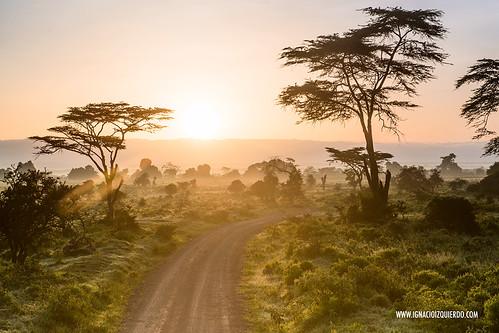 Kenya - Nakuru 23