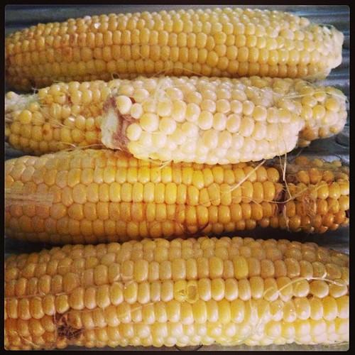 相変わらずブサイクな、うちの畑のトウモロコシを昼飯前に塩茹でして喰う