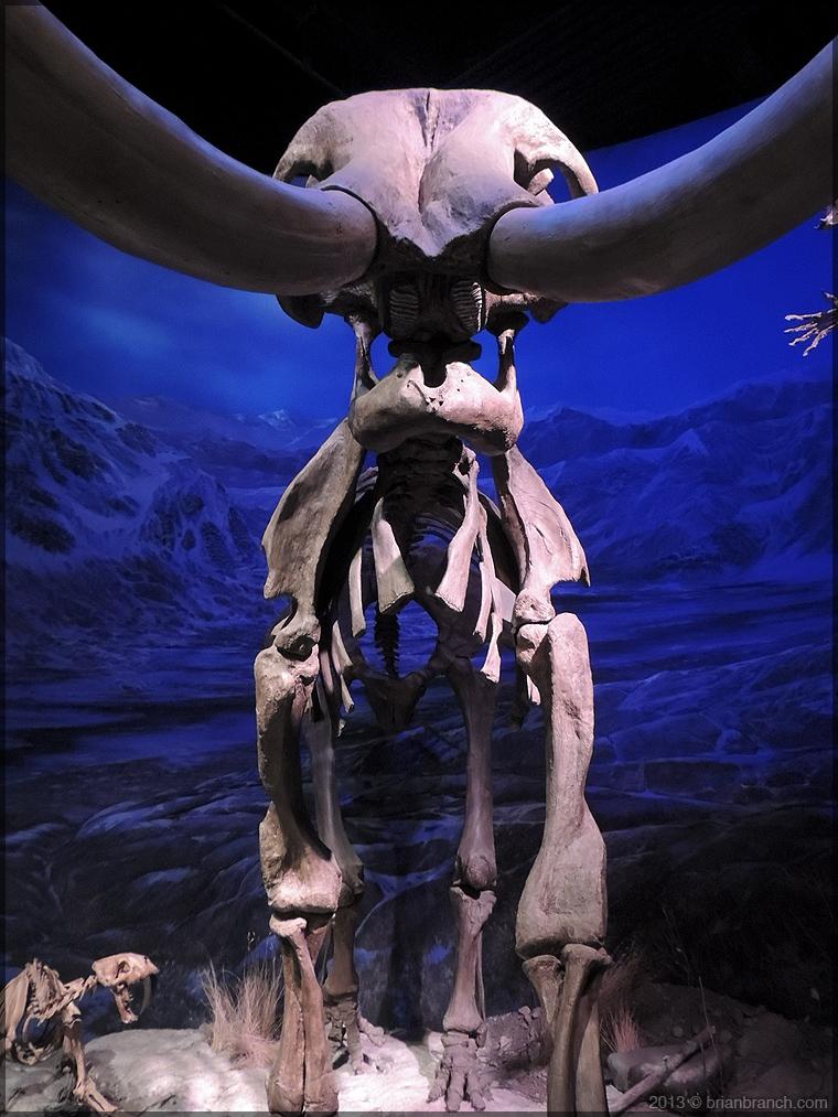 DSCN2482_tyrrell_museum