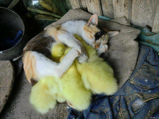 New family :-)
