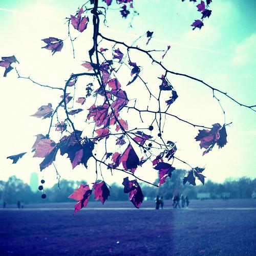 Alien Autumn - A Park on Another Planet