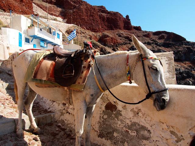 Donkey in Oia, Santorini