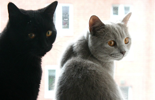 Lilly + Benno