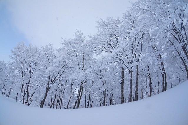 写真_スキーへ行こう!1