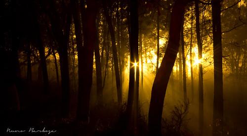 longexposure trees light mist portugal nature fog night canon dark landscape gold colours natureza chuva noite inverno cor beautifull minho vilaverde nevoeiro