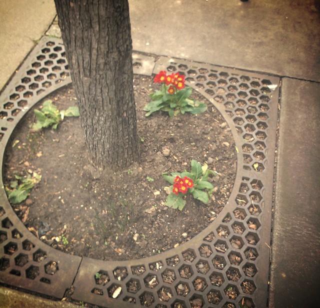 kukkia kadulla