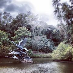 The Botanical Gardens in #Singapore at Swan Lake... #latergram