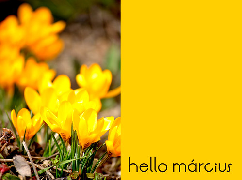 hello_marcius