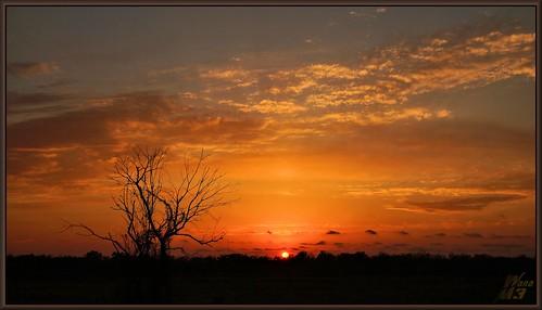 park sunset sky tree clouds texas branches sony houston a57 goldensky scrffy wanam3 elfrancoleepark sonya57 scruffylittletree