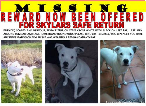 Mon, Mar 17th, 2014 Lost Female Dog - The Local Area, Greystones, Wicklow