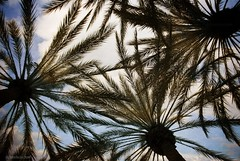 California shade....