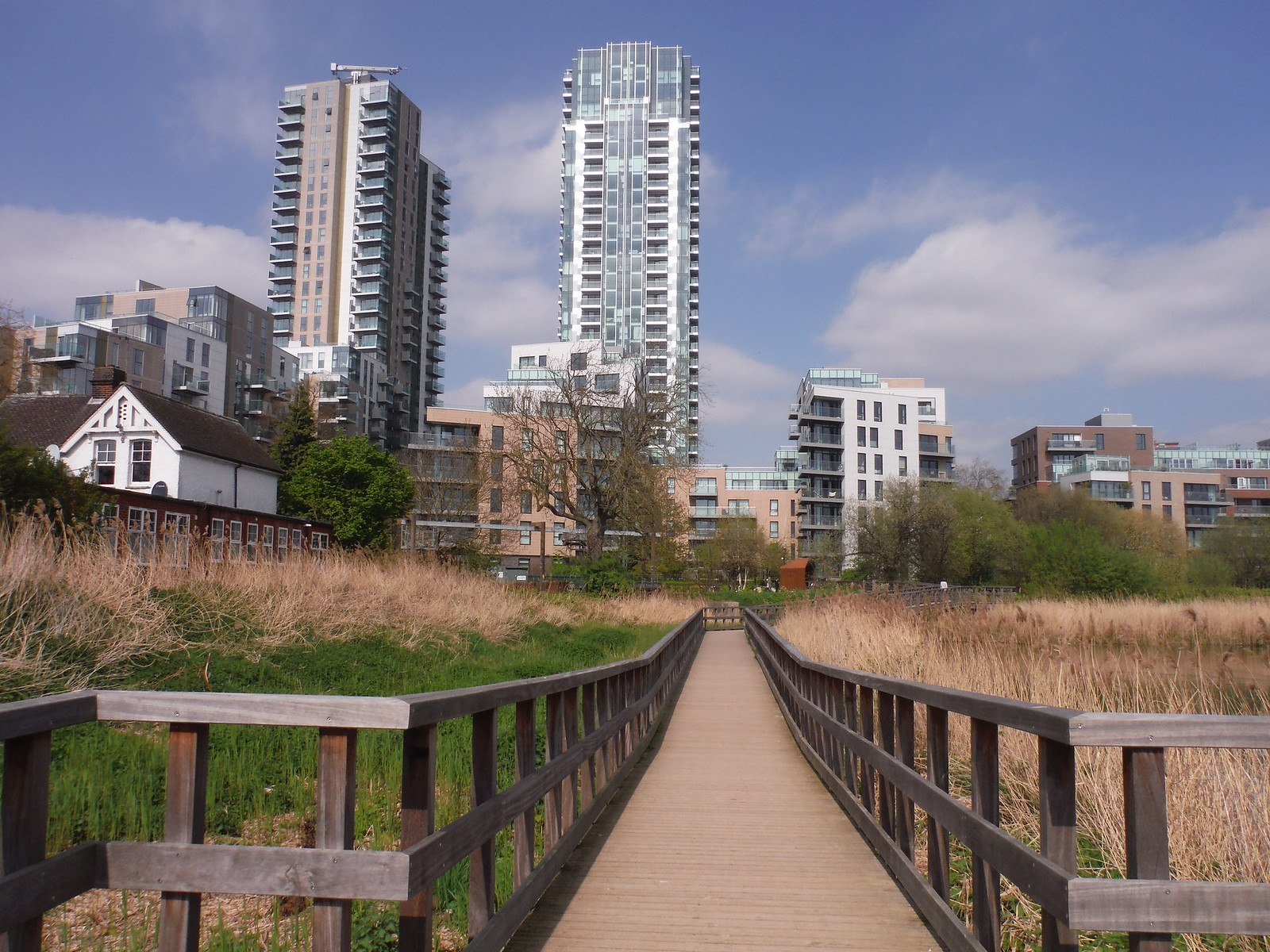 Boardwalk through Reed Beds (I), Woodberry Wetlands SWC Short Walk 26 - Woodberry Wetlands (Stoke Newington Reservoirs)