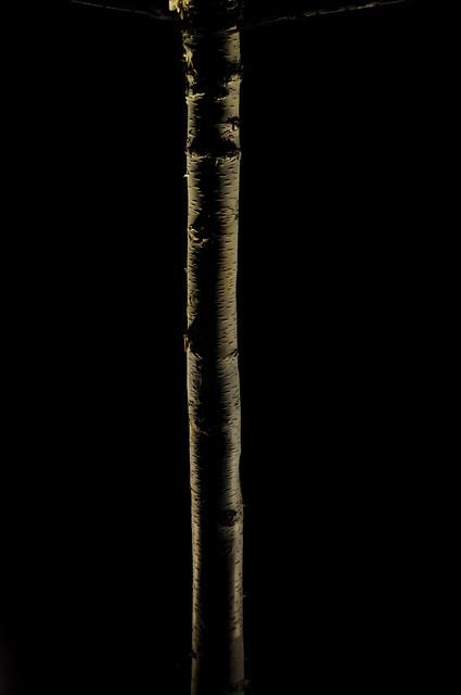 Stem, Nikon D90, AF-S DX Zoom-Nikkor 18-135mm f/3.5-5.6G IF-ED