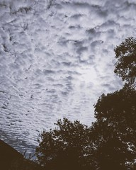 The sky this morning - I missed those kinds of clouds! The sky seems higher.