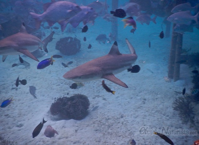 shark coral reef 0000 Raja Ampat, Papua, Indonesia