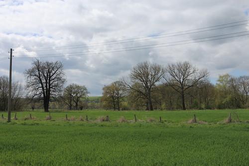 Restbäume des ursprünglichen Auenwaldes