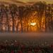 Sunrise by John Behrends