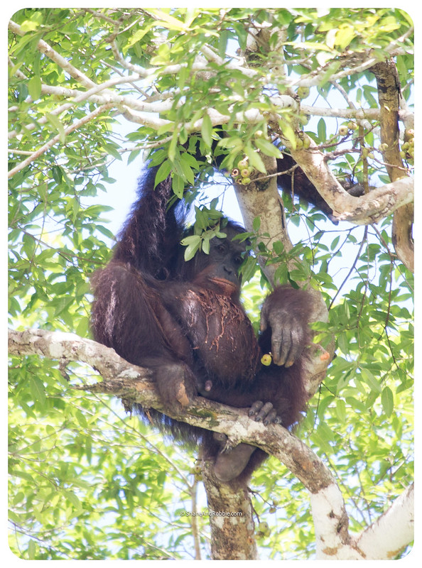 Borneo-20170411-_MG_7577