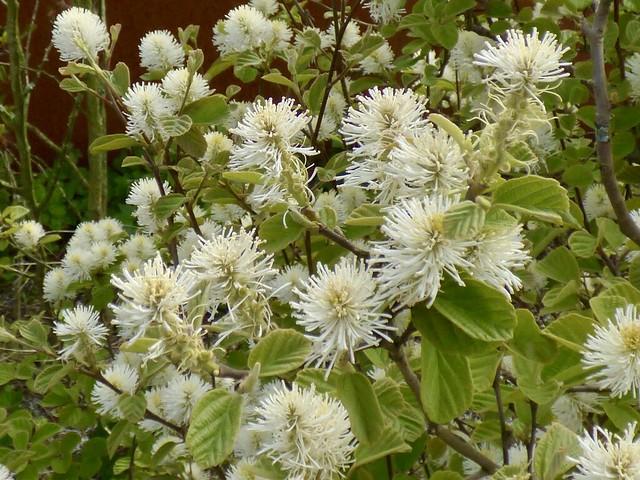 Flora op de Paleisbrug .
