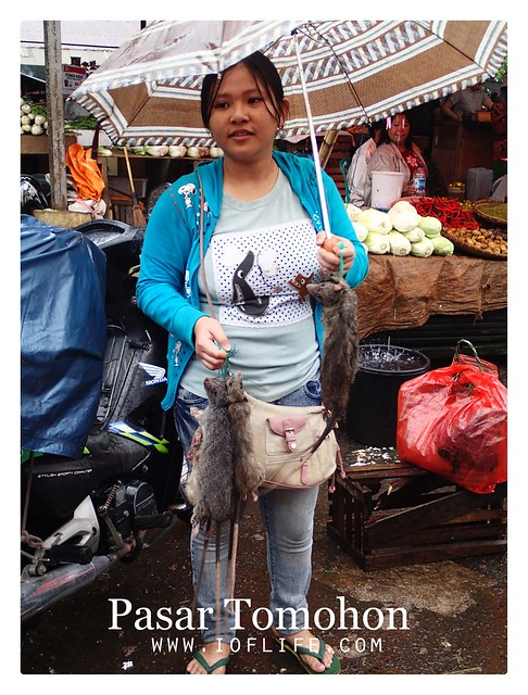 Pedagang tikus hutan pasar tomohon