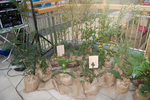 Plantas nativas de Chile. Temuco.