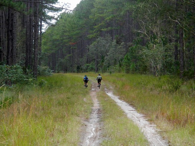 Landsborough Pine Forest