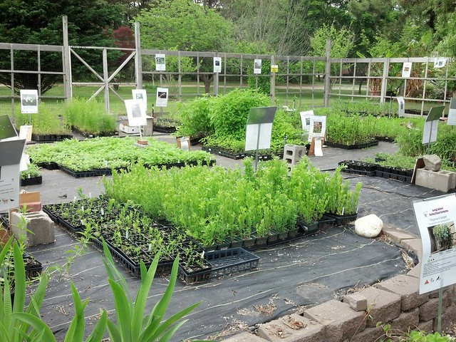 I have arrived! LINPI Plant Sale