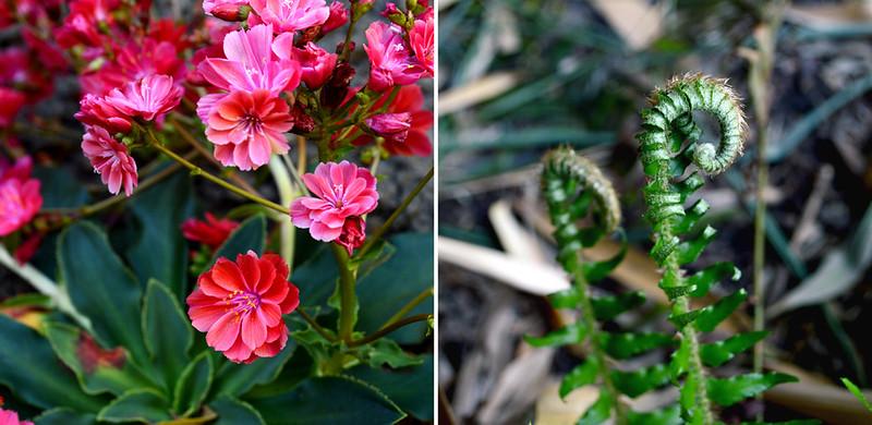 Spring Plants