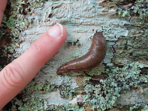 Big Slug