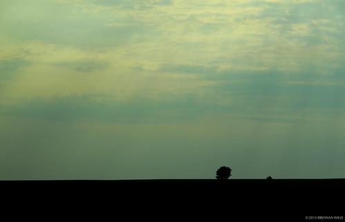 trees light summer sky sun sunlight tree field clouds canon landscape evening illinois big corn midwest afternoon flat farm empty horizon country central july powershot heartland crops springfield rays minimalism plains minimalist g12 brennanwille