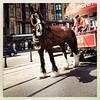 Horse drawn tram. Douglas IOM