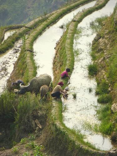 Yunnan13-Yuanyang 22 (8)