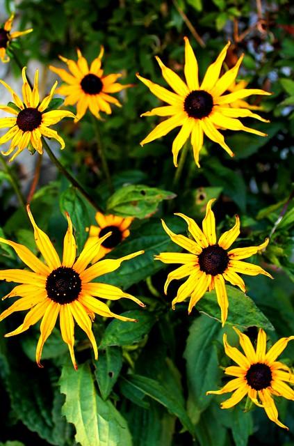 Peak District Flowers Dailyshoot Flickr Photo Sharing
