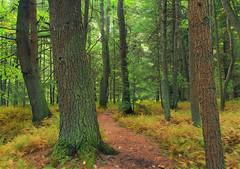 Streamside Woods (2)