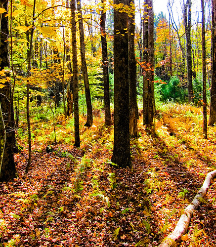 autumn trees fall nature leaves forest odc seasonalcolors canons95